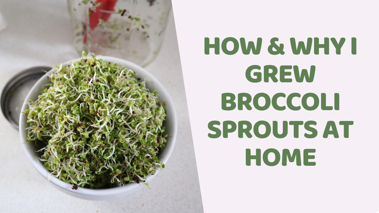 how to make broccoli sprouts at home