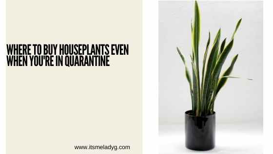 where to find plants during quarantine plant shopping